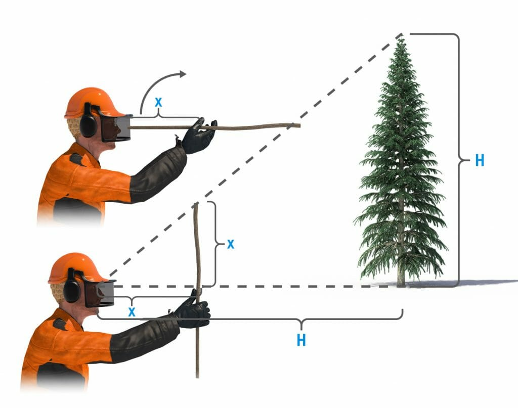 Illustration of how to use a stick in different angles to estimate how tall a tree is
