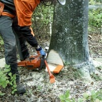Forestry worker using a breaking bar to knock a felling wedge into a tree