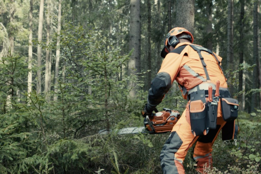 Prepare for felling a tree - Clear the undergrowth
