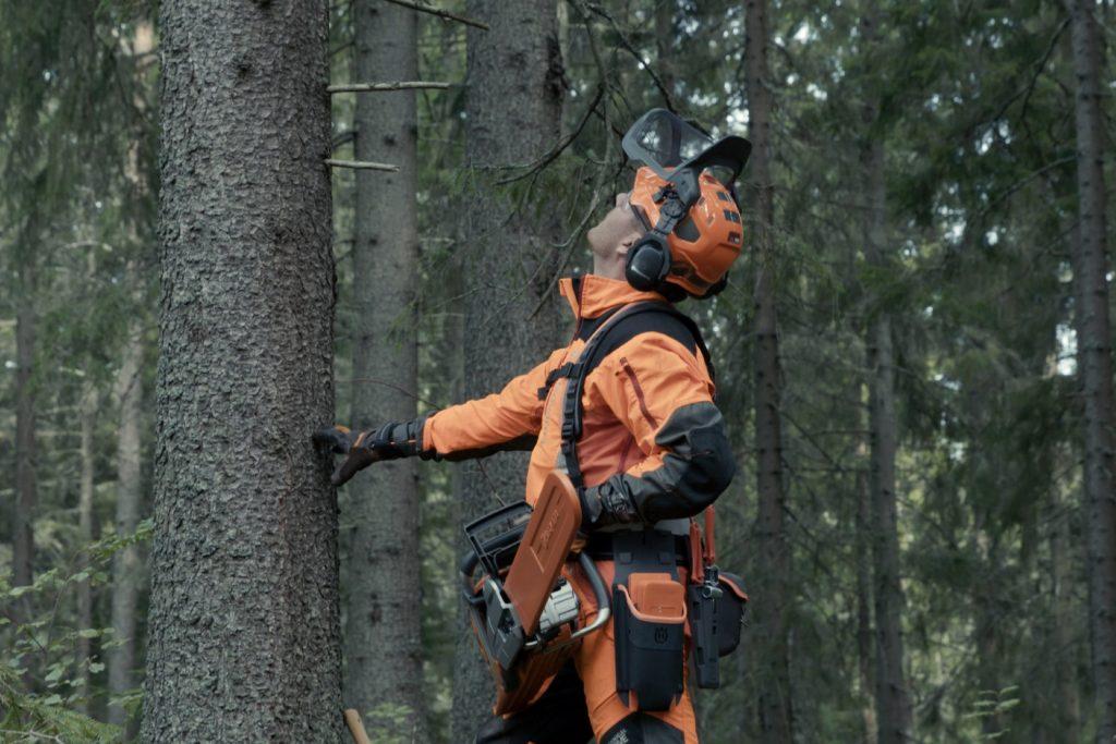 Prepare for felling a tree - Plan the felling