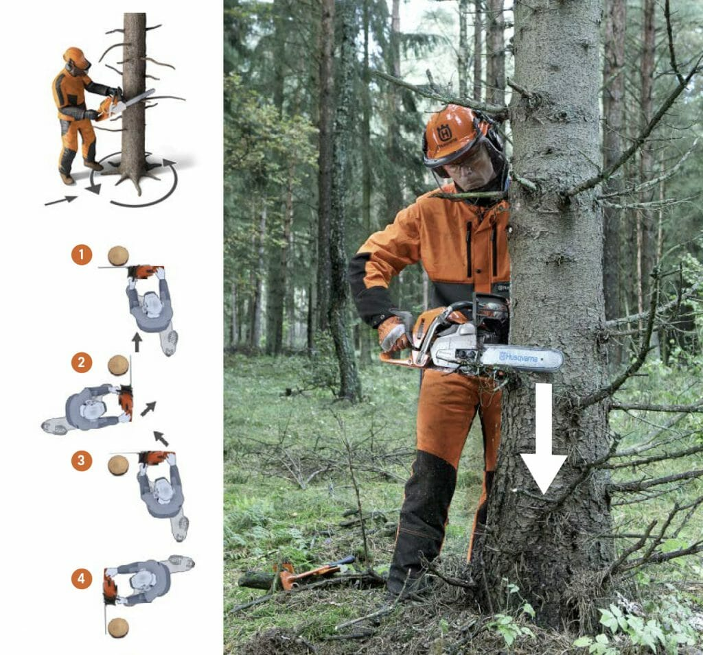 Picture and illustrations showing technique and work pattern for removing low branches and twigs before felling a tree