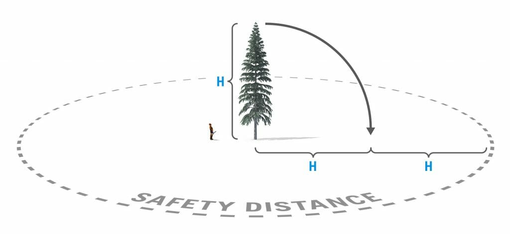 Illustration of recommended safety distance from the tree that should be felled