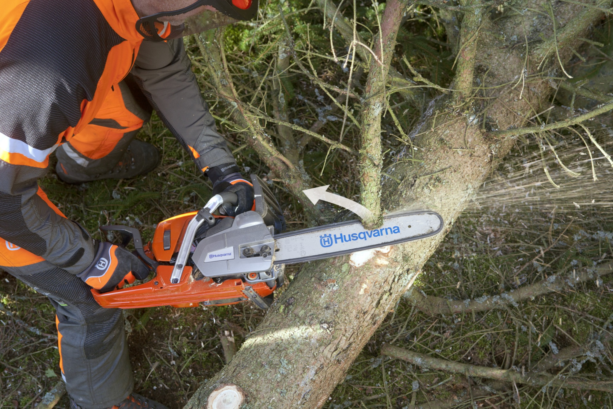 Forestry worker limbing a branch from right to left at the top side of the tree