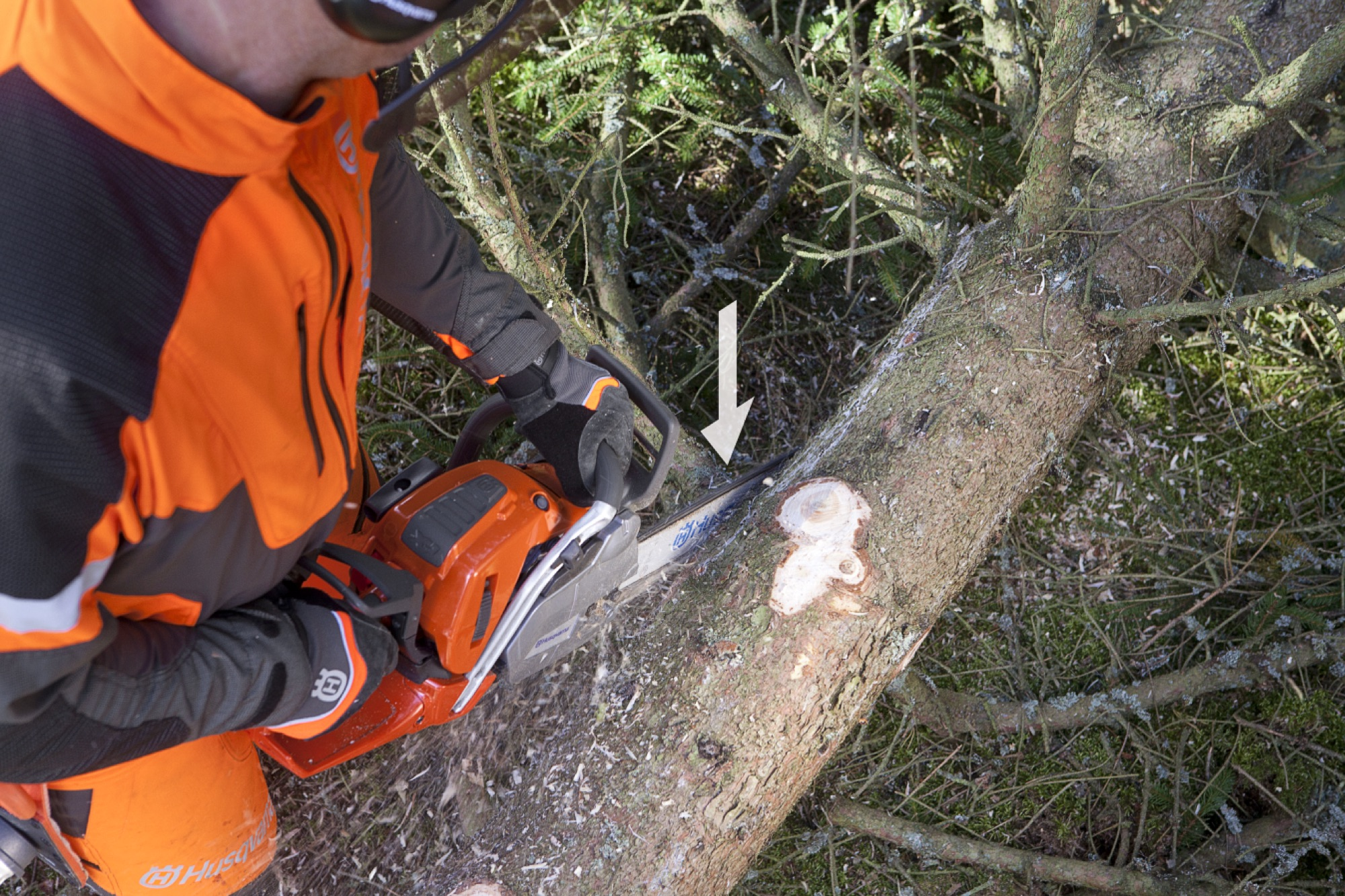 Forestry worker limbing a branch from above at the left side of the tree