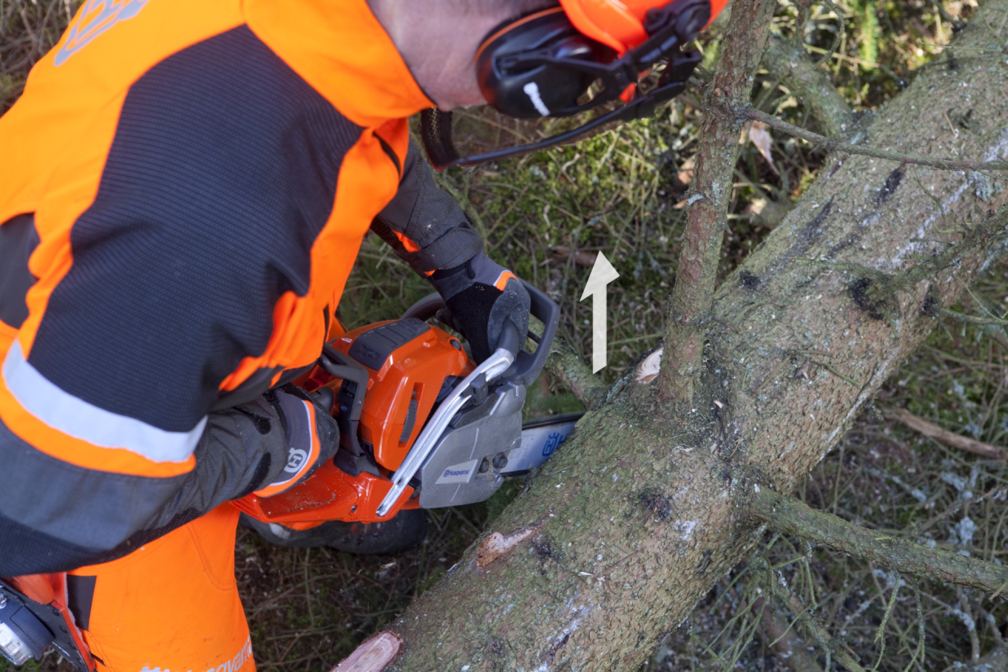 Forestry worker continues at the left side of the tree, limbing a branch from below