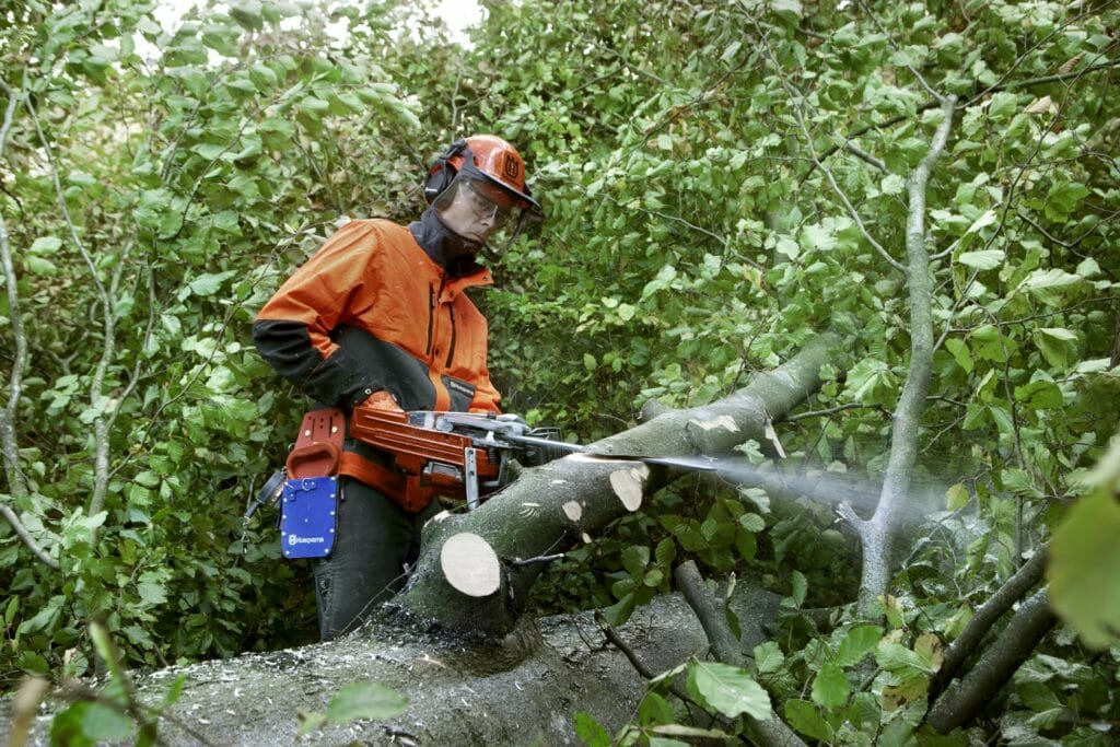 Forestry worker making a diagonal cut to softly break a tensioned branch