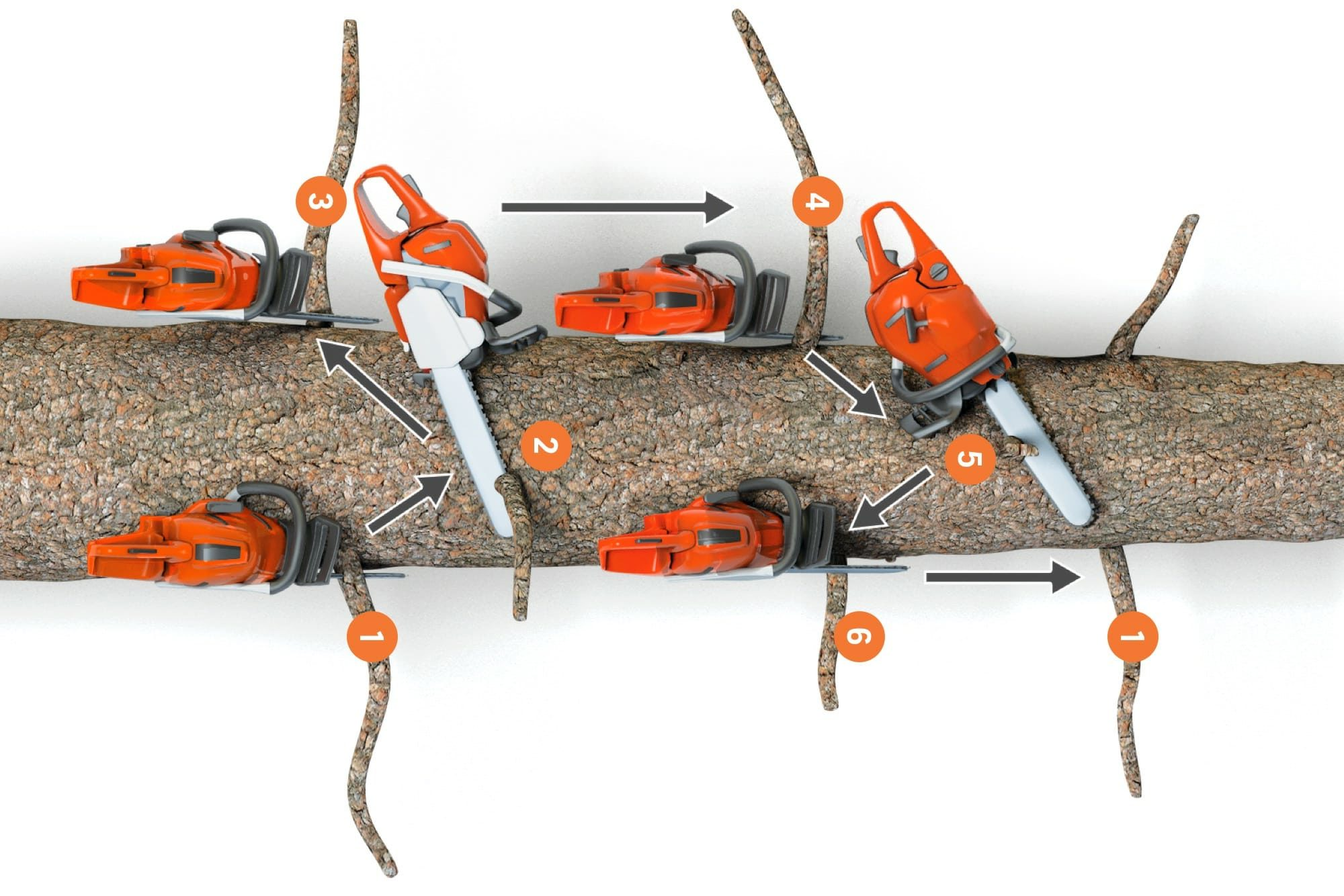 A tree seen from above, graphics showing the work flow for basic and advanced limbing technique.