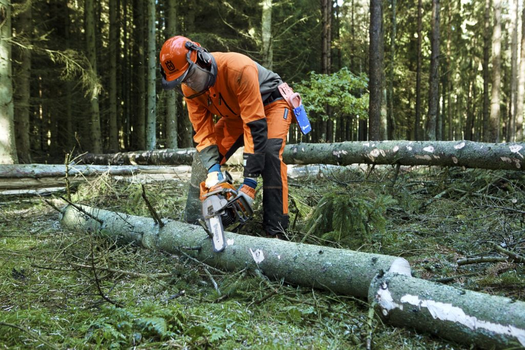 Forestry worker bending his knees, resting the arms on his thighs while limbing the downward face of a tree
