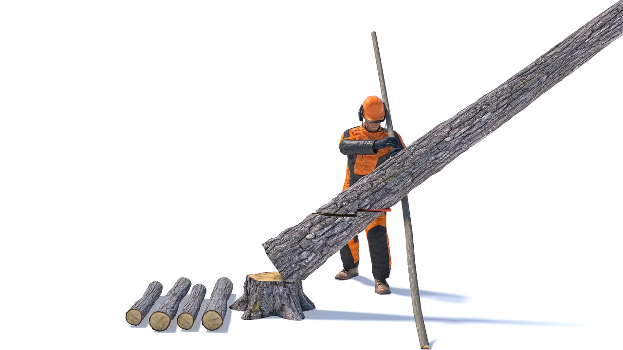 Forestry worker using a pole as a lever to make the tree split and slide down