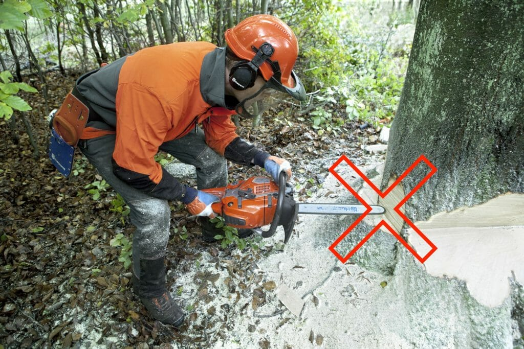 Forestry worker is incorrectly putting the nose of the guide bar into the trunk
