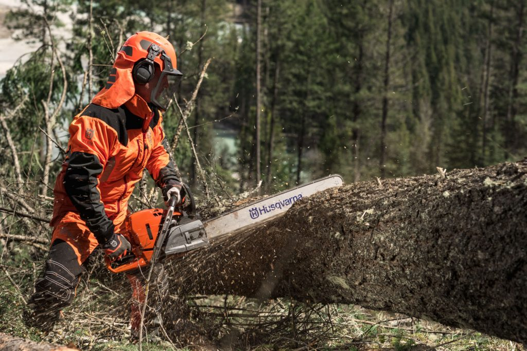 Forestry worker crosscutting a larger tree with a chainsaw equipped with a long bar guide