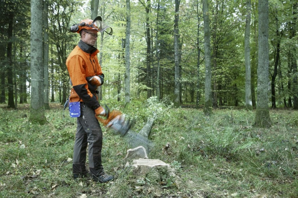 Forestry worker makes the chainsaw's guide bar hit a tree stump, which triggers the chain brake